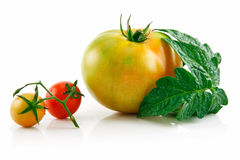 Ripe Wet Yellow and Red Tomatoes with Leaves Stock Image
