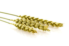Ripe wheat Stock Photography