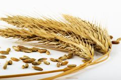 Ripe wheat ears Stock Image