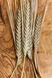 Ripe wheat ears,close up Stock Image