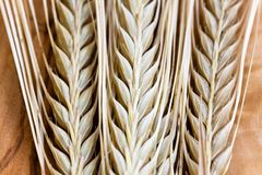 Ripe wheat ears,close up Royalty Free Stock Photography