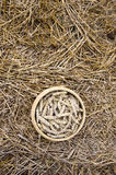 Ripe wheat ears after harvesting in basket on field with straw Stock Images