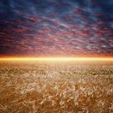 Ripe wheat field. Dark red sunset, glowing horizon stock images