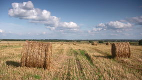 Ripe wheat field, harvest Stock Images