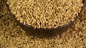 Ripe wheat grains scattered on a plate stock images
