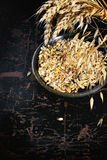 Ripe wheat and oat ears and seeds Royalty Free Stock Image