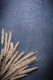 Ripe wheat and rye ears on black background Stock Images