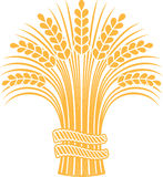 Ripe wheat sheaf. Golden ripe wheat sheaf. Vector decorative element, brand icon or logo template Royalty Free Stock Images