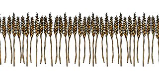 Ripe Wheat Spikelets Endless Brush. Border Ribbon of Malt with Space for Text. Farm Harvest Template. Realistic Hand. Drawn Illustration. Savoyar Doodle Style Royalty Free Stock Photography