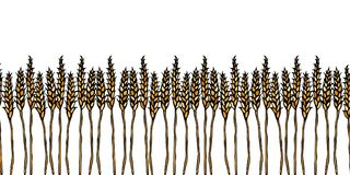 Ripe Wheat Spikelets Endless Brush. Border Ribbon of Malt with Space for Text. Farm Harvest Template. Realistic Hand. Drawn Illustration. Savoyar Doodle Style Royalty Free Stock Photos