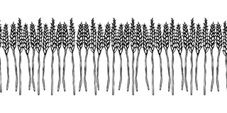 Ripe Wheat Spikelets Endless Brush. Border Ribbon of Malt with Space for Text. Farm Harvest Template. Realistic Hand Drawn Illustr. Ation. Savoyar Doodle Style Royalty Free Stock Photos