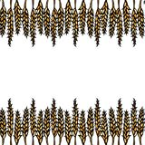 Ripe Wheat Spikelets Endless Brush. Border Ribbon of Malt with Space for Text. Farm Harvest Template. Realistic Hand Drawn Illustr. Ation. Savoyar Doodle Style Stock Image