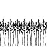 Ripe Wheat Spikelets Endless Brush. Border Ribbon of Malt with Space for Text. Farm Harvest Template. Realistic Hand Drawn Illustr. Ation. Savoyar Doodle Style Stock Photography