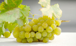 Ripe white grape on sunny day Stock Image