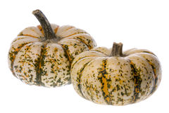 Ripe white pumpkins Stock Image