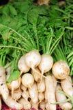 Ripe white radish root i Stock Image