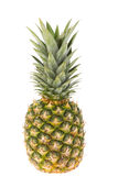 Ripe whole pineapple isolated Stock Photography