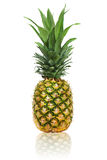 Ripe whole pineapple  on white background Royalty Free Stock Photography