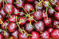 Ripe Wild Cherries with stems Royalty Free Stock Photo