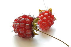 Ripe wild raspberries Stock Photo