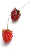 Ripe wild raspberries. Ripe red wild raspberries on white Royalty Free Stock Photography