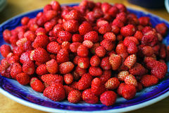 Ripe wild strawberries Royalty Free Stock Photos