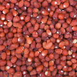 Ripe wild strawberry close-up Royalty Free Stock Photography