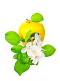 Ripe yellow  apple and apple-tree flowers Royalty Free Stock Photography