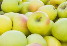 Ripe yellow apples Stock Photos