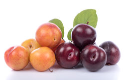 Ripe yellow and cherry plums Stock Image