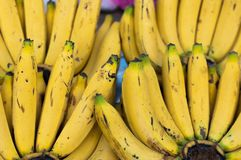 Ripe yellow cluster banana background in market, Musa AAA group `Kluai Hom khiew` royalty free stock photos