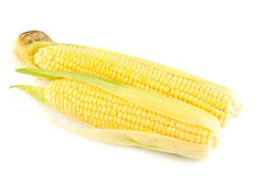 Ripe yellow corn Stock Images