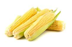 Ripe yellow corn Royalty Free Stock Photo