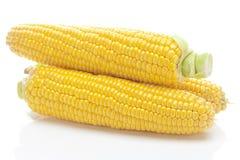 Ripe yellow corn Royalty Free Stock Photos