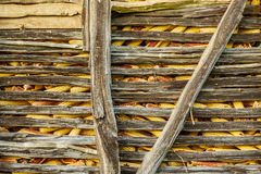 Ripe yellow corn in the old wooden  barn Stock Images