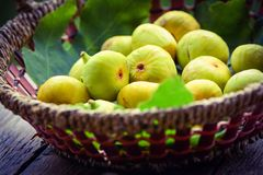 Figs in basket Royalty Free Stock Image