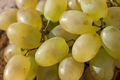 Ripe yellow grapes. Closeup bunch of ripe grapes Royalty Free Stock Images