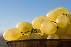 Ripe yellow grapes. Closeup bunch of ripe grapes on blue sky background Royalty Free Stock Images