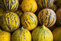 Ripe yellow melons in the store. Agriculture. Stock Photography
