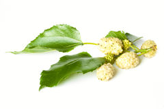 Ripe yellow mulberry. Isolated on a white background Stock Photography