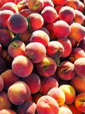 Ripe Yellow Peaches. Many ripe locally grown organic yellow peaches with furry skin in a pile for sale at a weekly farmers fresh fruit and vegetable market stock image