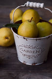 Ripe yellow pears in white metal bucket on gray wooden backgroun. D, selective focus Royalty Free Stock Photo