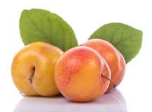 Ripe yellow plums Royalty Free Stock Photo
