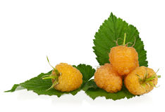 Ripe yellow raspberry. With green leaves over white background Royalty Free Stock Photography