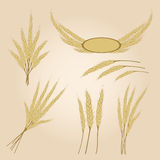 Ripe yellow rye ears, agricultural Royalty Free Stock Photos