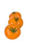 Ripe yellow tomatoes Stock Photography