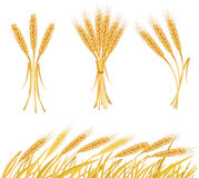Ripe yellow wheat ears, agricultural  Stock Images