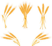 Ripe yellow wheat ears, agricultural  Royalty Free Stock Photos