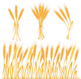Ripe yellow wheat ears, agricultural. Illustration Stock Photography