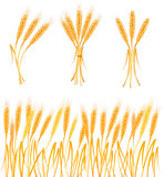 Ripe yellow wheat ears, agricultural vector Stock Images